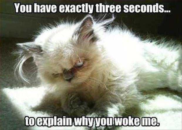 a-funny-cat-wake-up