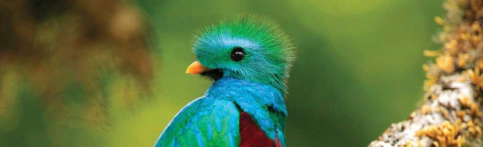 quetzal_1_costa_rica