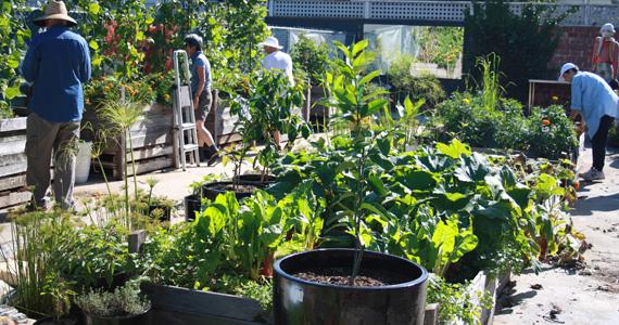 Mosman-Community-Garden
